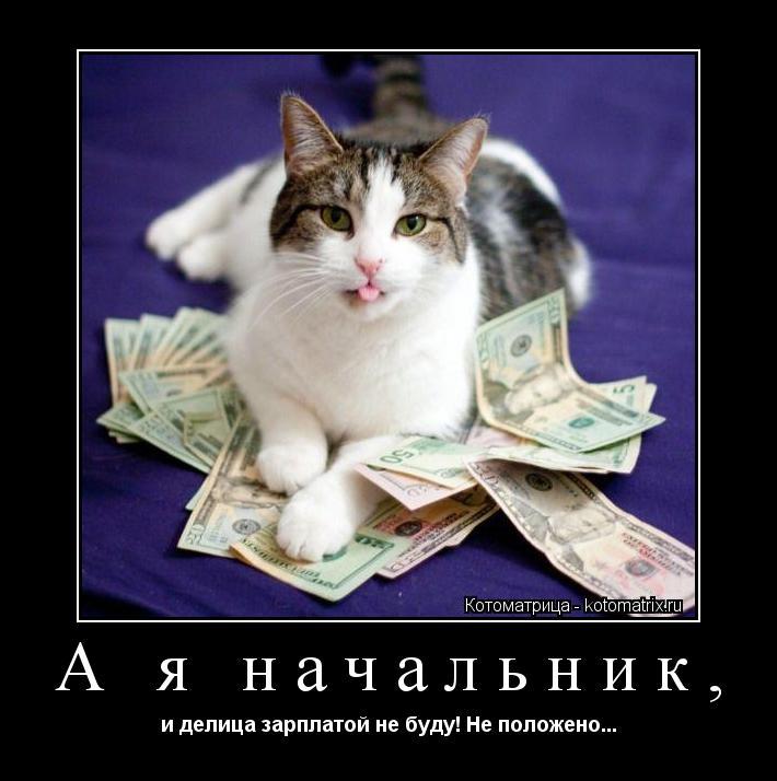 Котоматрица: А я начальник, и делица зарплатой не буду! Не положено...