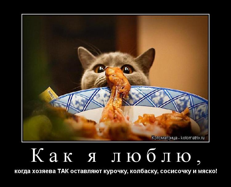 Котоматрица: Как я люблю, когда хозяева ТАК оставляют курочку, колбаску, сосисочку и мяско!