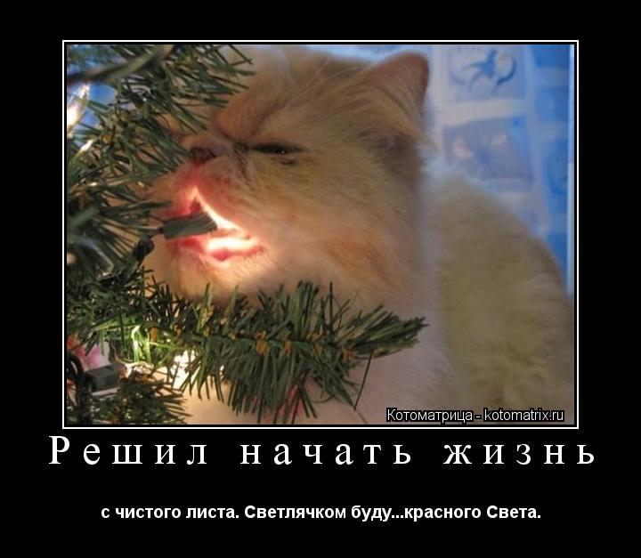 Котоматрица: Решил начать жизнь с чистого листа. Светлячком буду...красного Света.