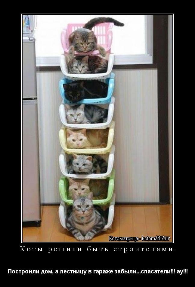 Котоматрица: Коты решили быть строителями. Построили дом, а лестницу в гараже забыли...спасатели!!! ау!!!