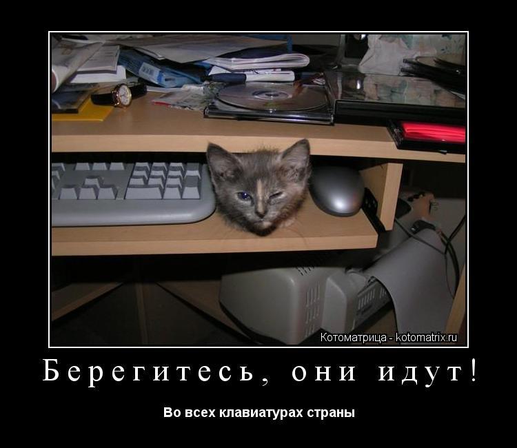 Котоматрица: Берегитесь, они идут! Во всех клавиатурах страны
