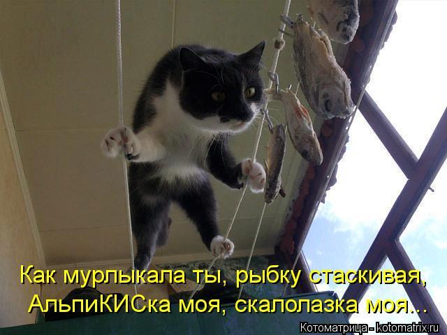 Котоматрица: Как мурлыкала ты, рыбку стаскивая, АльпиКИСка моя, скалолазка моя...