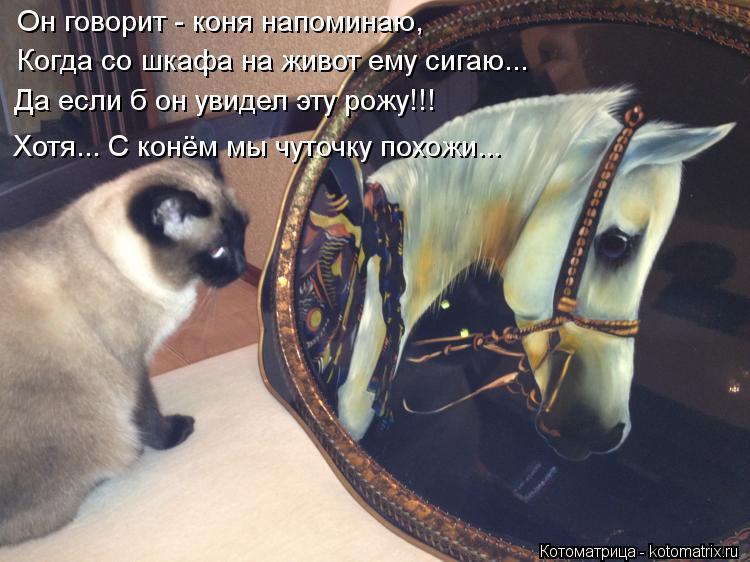 Котоматрица: Он говорит - коня напоминаю, Когда со шкафа на живот ему сигаю... Да если б он увидел эту рожу!!! Хотя... С конём мы чуточку похожи...