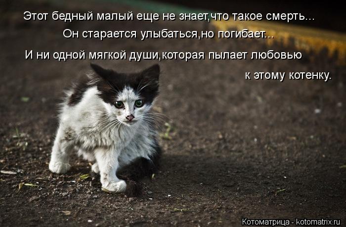 Котоматрица: Этот бедный малый еще не знает,что такое смерть... Он старается улыбаться,но погибает... И ни одной мягкой души,которая пылает любовью к этому