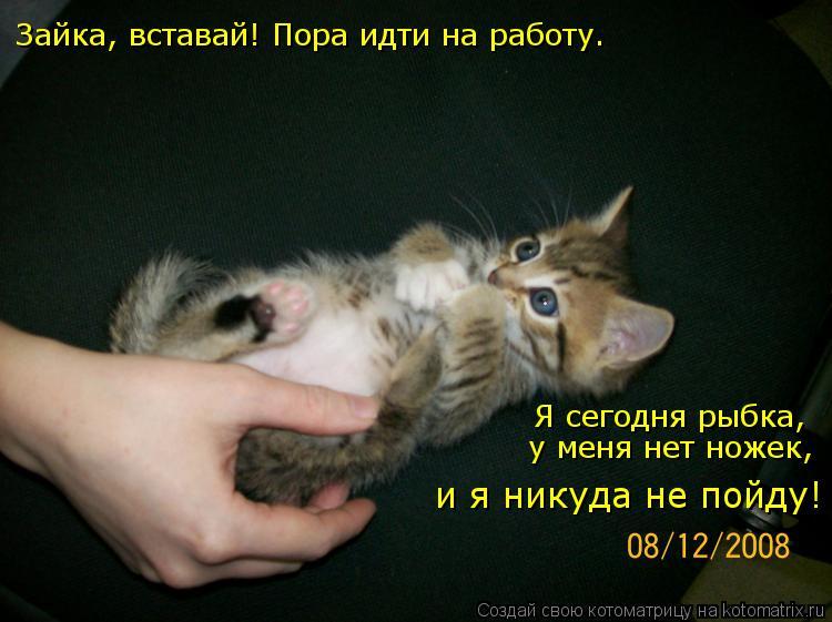 небо Почему зайцев нет я любля тебя жизнь подчеркнул также, что