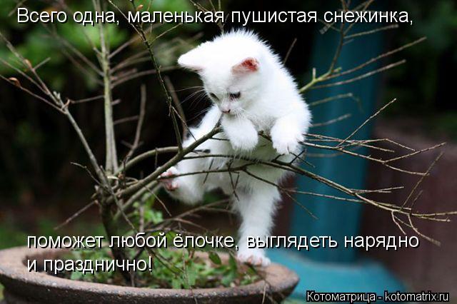 Котоматрица: Всего одна, маленькая пушистая снежинка, поможет любой ёлочке, выглядеть нарядно  и празднично!