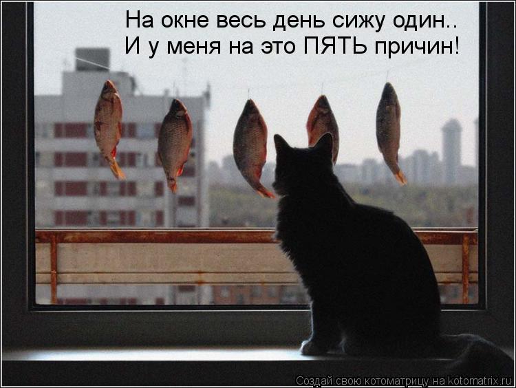 Котоматрица: На окне весь день сижу один.. И у меня на это ПЯТЬ причин!