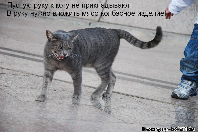 Котоматрица: Пустую руку к коту не прикладывают! В руку нужно вложить мясо-колбасное изделие!