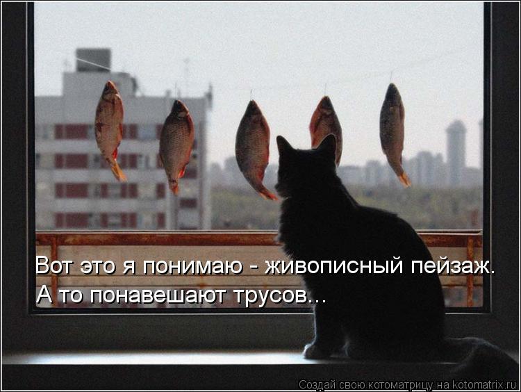 Котоматрица: Вот это я понимаю - живописный пейзаж. А то понавешают трусов...