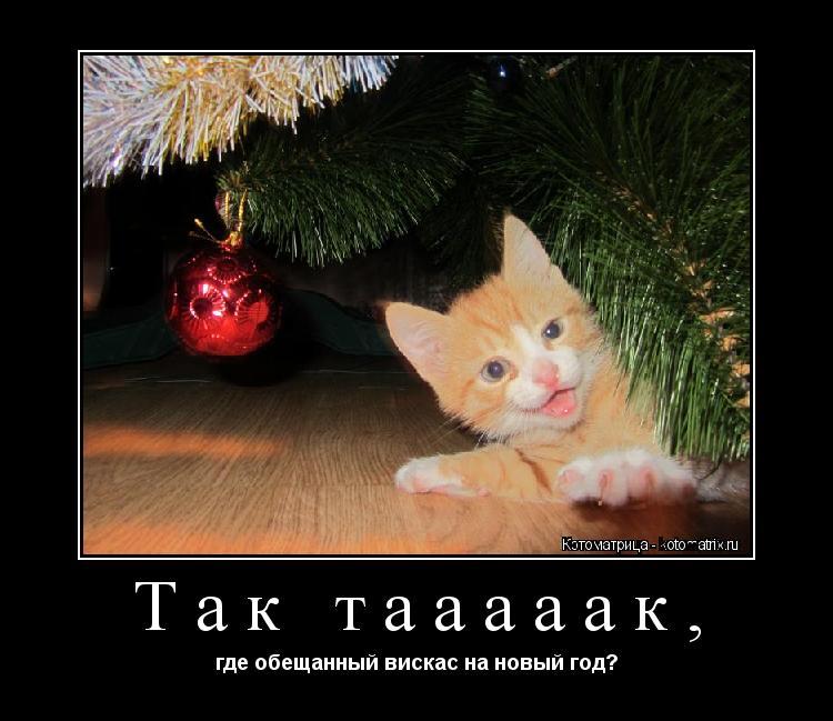 Котоматрица: Так тааааак, где обещанный вискас на новый год?