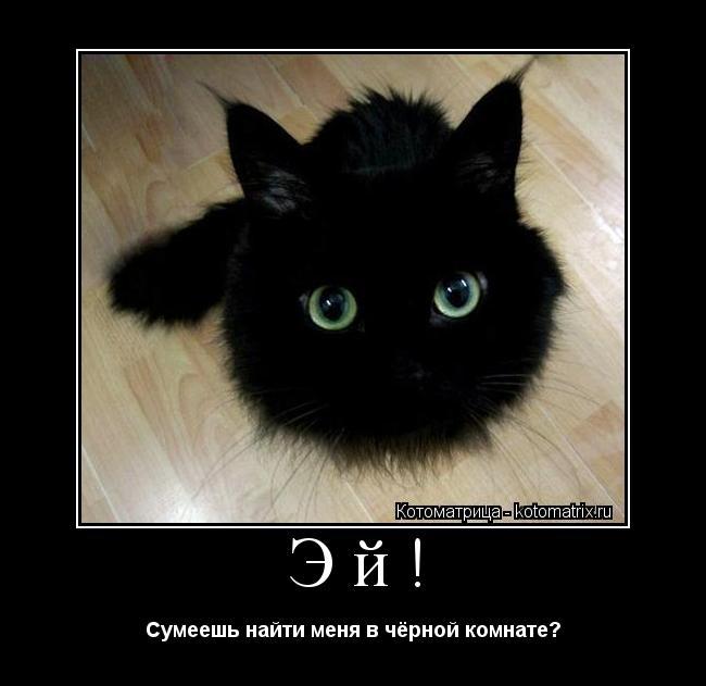 Котоматрица: Эй! Сумеешь найти меня в чёрной комнате?