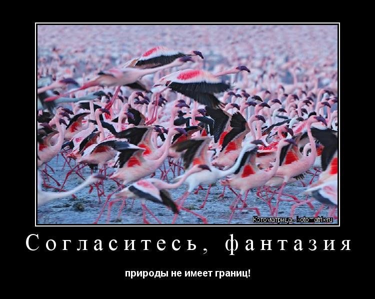 Котоматрица: Согласитесь, фантазия природы не имеет границ!