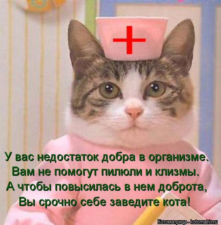 Котоматрица: У вас недостаток добра в организме. Вам не помогут пилюли и клизмы. А чтобы повысилась в нем доброта, Вы срочно себе заведите кота!