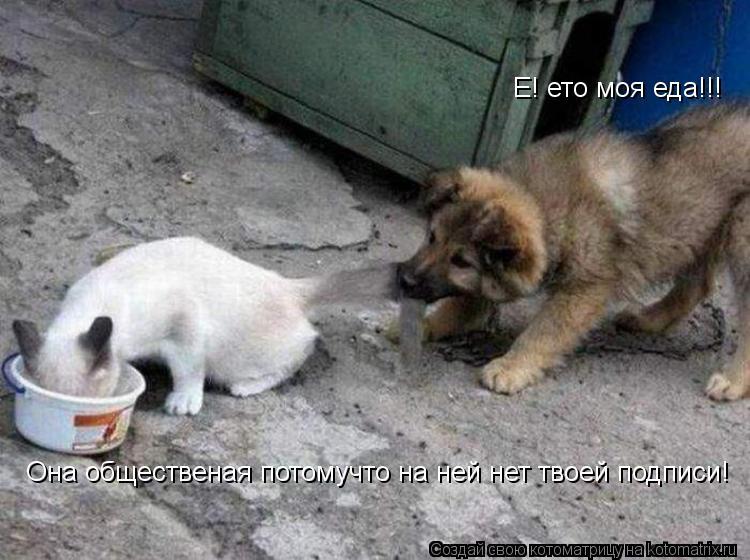 Котоматрица: Е! ето моя еда!!! Она общественая потомучто на ней нет твоей подписи!