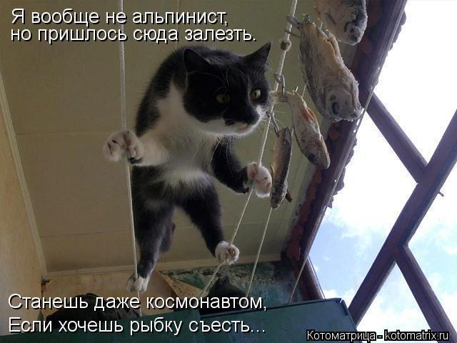 Котоматрица: Я вообще не альпинист, но пришлось сюда залезть. Станешь даже космонавтом, Если хочешь рыбку съесть...