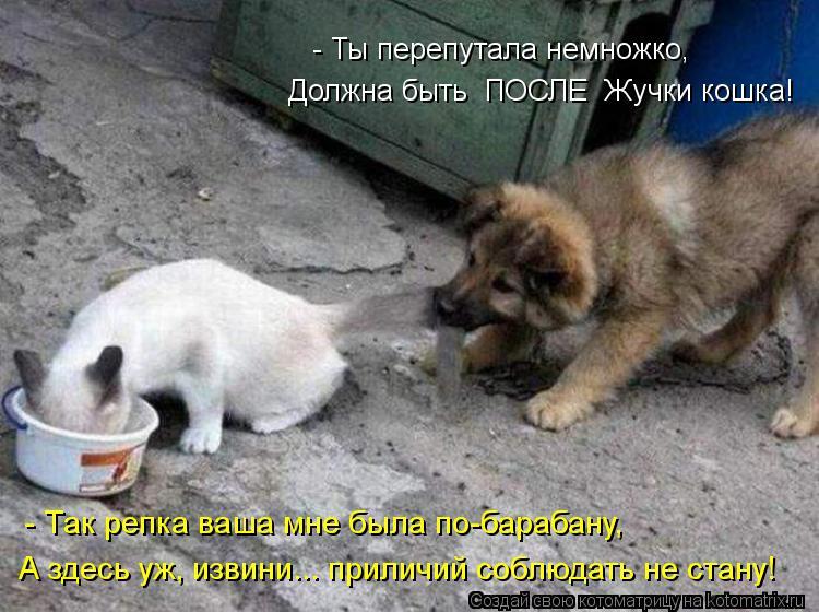 Котоматрица: - Ты перепутала немножко, Должна быть  ПОСЛЕ  Жучки кошка! А здесь уж, извини... приличий соблюдать не стану! - Так репка ваша мне была по-бараба