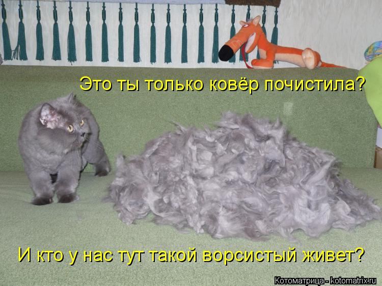 Котоматрица: Это ты только ковёр почистила? И кто у нас тут такой ворсистый живет?