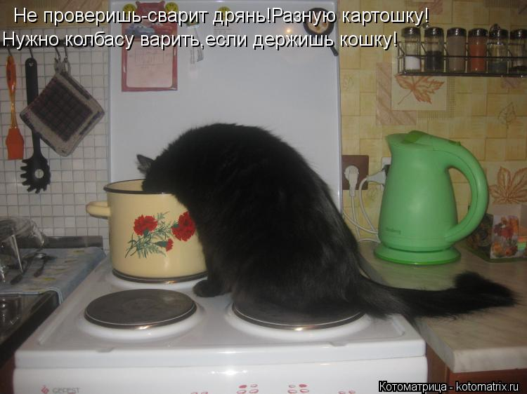 Котоматрица: Не проверишь-сварит дрянь!Разную картошку! Нужно колбасу варить,если держишь кошку!