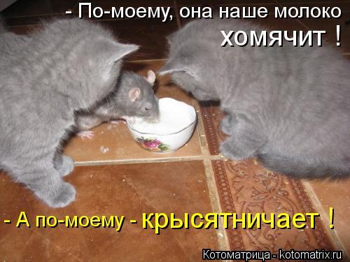 Котоматрица: - По-моему, она наше молоко хомячит ! - А по-моему -  крысятничает !