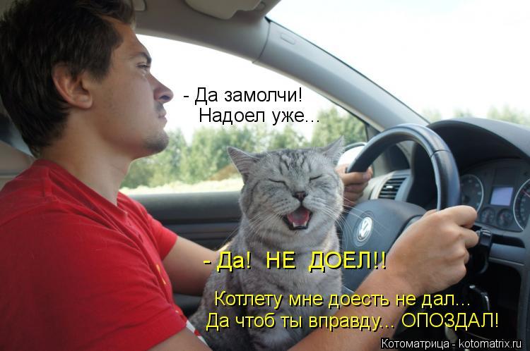 Котоматрица: Надоел уже... - Да замолчи! - Да!  НЕ  ДОЕЛ!! Котлету мне доесть не дал... Да чтоб ты вправду... ОПОЗДАЛ!