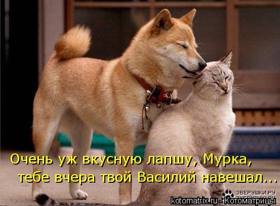 Котоматрица: Очень уж вкусную лапшу, Мурка, тебе вчера твой Василий навешал...
