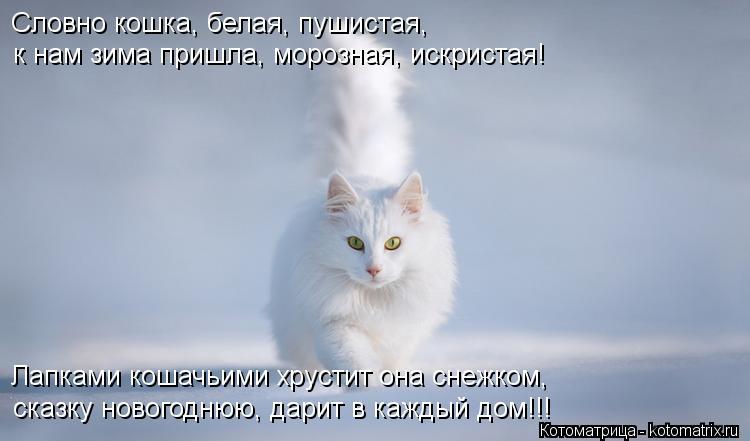Котоматрица: Словно кошка, белая, пушистая, к нам зима пришла, морозная, искристая! Лапками кошачьими хрустит она снежком, сказку новогоднюю, дарит в кажд