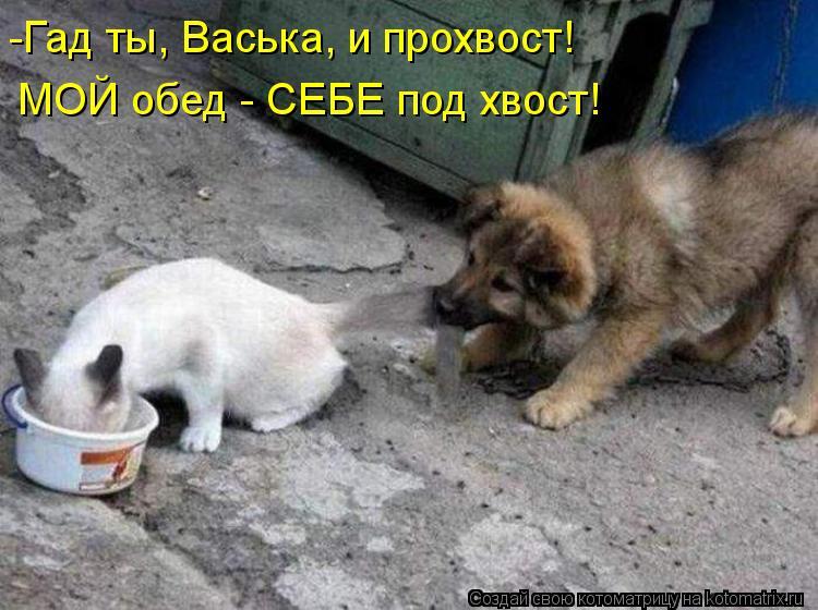 Котоматрица: -Гад ты, Васька, и прохвост! МОЙ обед - СЕБЕ под хвост!