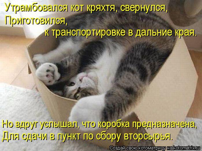 Котоматрица: Утрамбовался кот кряхтя, свернулся, Приготовился,  к транспортировке в дальние края. Но вдруг услышал, что коробка предназначена, Для сдачи