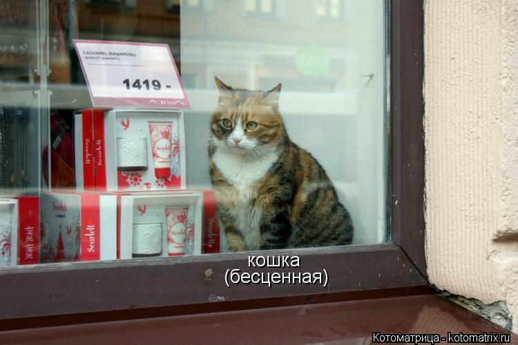 Котоматрица: кошка (бесценная)