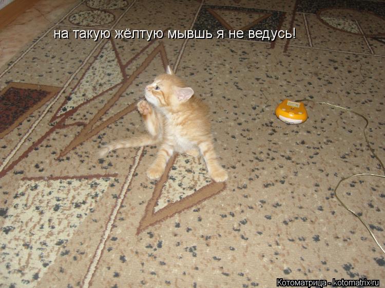 Котоматрица: на такую жёлтую мывшь я не ведусь!
