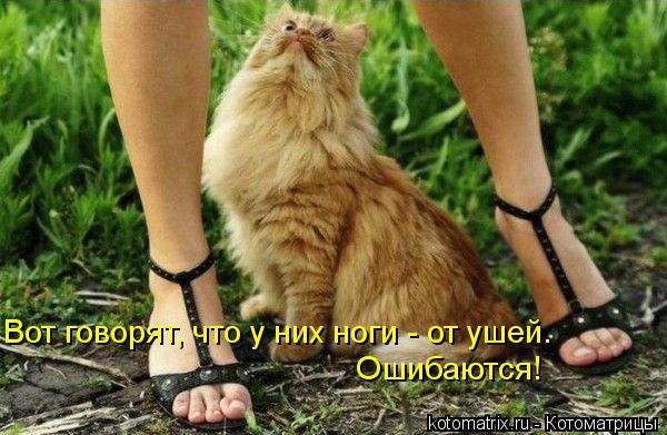 Котоматрица: Вот говорят, что у них ноги - от ушей.  Ошибаются!