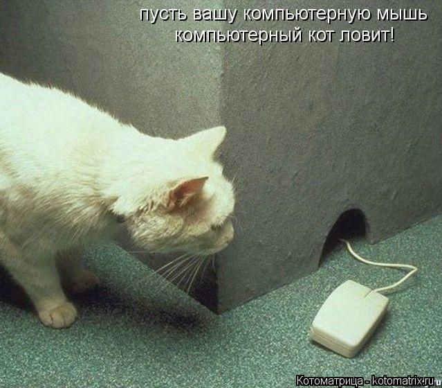 Котоматрица: пусть вашу компьютерную мышь компьютерный кот ловит!