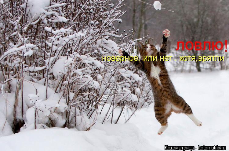 Котоматрица: ловлю !!!!!!!!!!!!!!!!!!!!!!!!!!!!!!!!! новерное. или нет . хотя,врятли