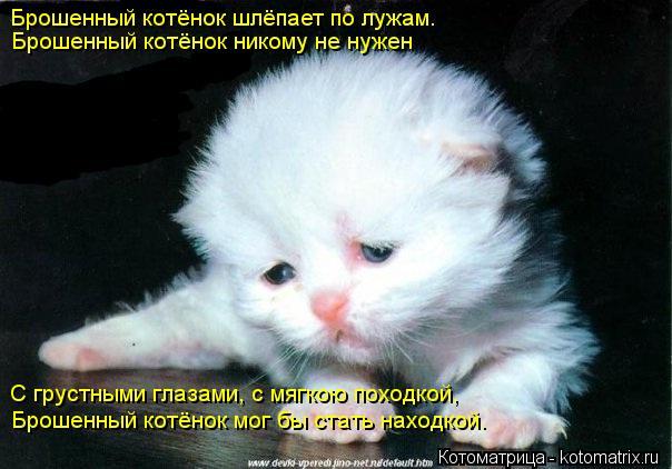 Котоматрица: Брошенный котёнок шлёпает по лужам. Брошенный котёнок никому не нужен С грустными глазами, с мягкою походкой, Брошенный котёнок мог бы стат