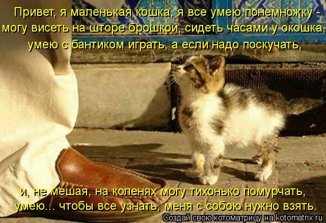 Котоматрица: Привет, я маленькая кошка, я все умею понемножку -  могу висеть на шторе брошкой, сидеть часами у окошка, умею с бантиком играть, а если надо п
