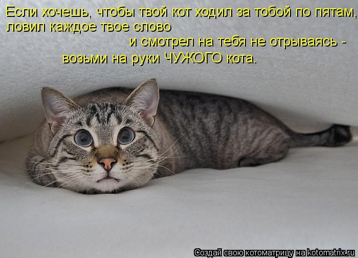 Котоматрица: Если хочешь, чтобы твой кот ходил за тобой по пятам,  ловил каждое твое слово  и смотрел на тебя не отрываясь -  возьми на руки ЧУЖОГО кота.