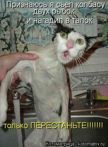 Котоматрица: Признаюсь я сьел колбасу двух рыбок   и нагадил в тапок только ПЕРЕСТАНЬТЕ!!!!!!!