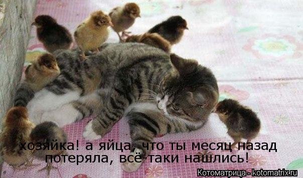 Котоматрица: хозяйка! а яйца, что ты месяц назад потеряла, всё-таки нашлись!