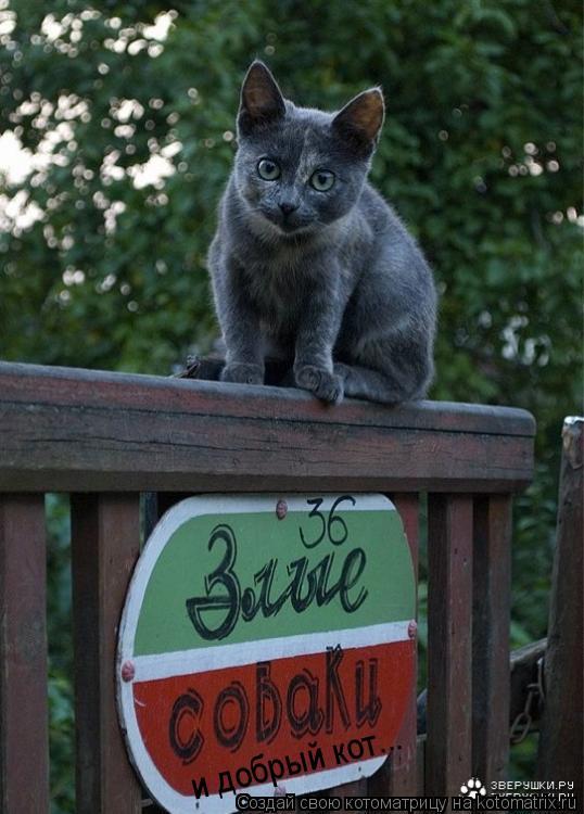Котоматрица: и добрый кот...