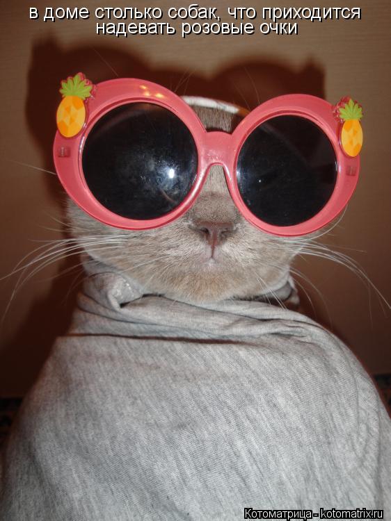 Котоматрица: в доме столько собак, что приходится надевать розовые очки