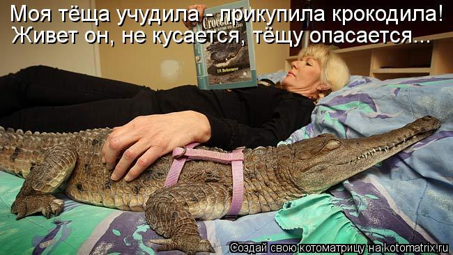 Котоматрица: Моя тёща учудила - прикупила крокодила!  Живет он, не кусается, тёщу опасается...