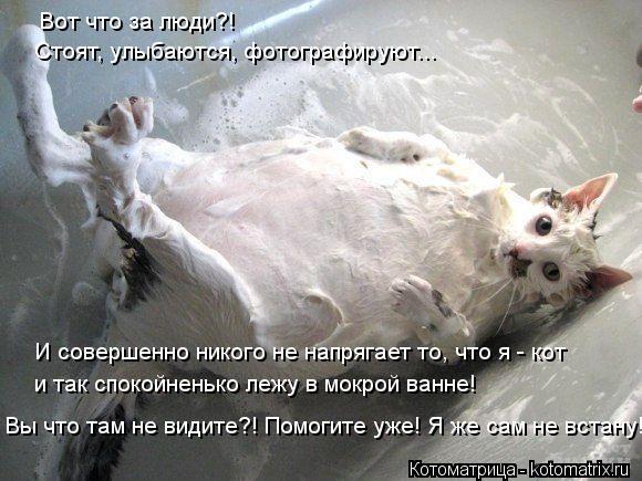 Котоматрица: Вот что за люди?! Стоят, улыбаются, фотографируют... И совершенно никого не напрягает то, что я - кот и так спокойненько лежу в мокрой ванне! Вы