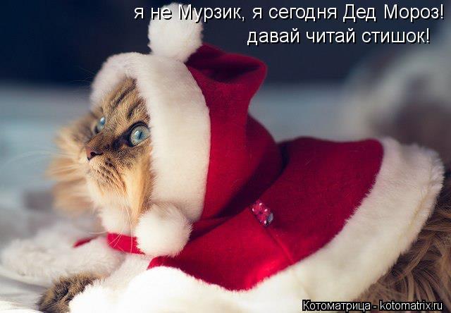Котоматрица: я не Мурзик, я сегодня Дед Мороз! давай читай стишок!