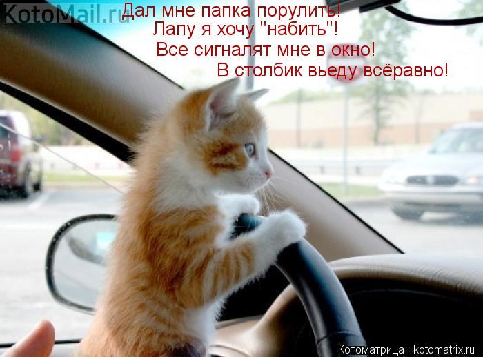 """Котоматрица: Дал мне папка порулить! Лапу я хочу """"набить""""! Все сигналят мне в окно! В столбик вьеду всёравно!"""