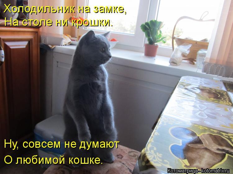 Котоматрица: Холодильник на замке, На столе ни крошки. Ну, совсем не думают О любимой кошке.