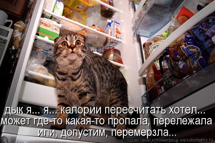 Котоматрица: дык я... я... калории пересчитать хотел...  может где-то какая-то пропала, перележала или допустим перемерзла... или, допустим, перемерзла...