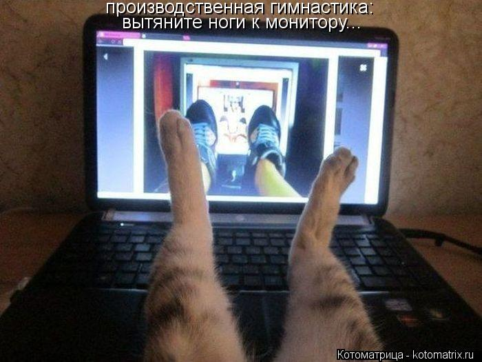 Котоматрица: производственная гимнастика: вытяните ноги к монитору...