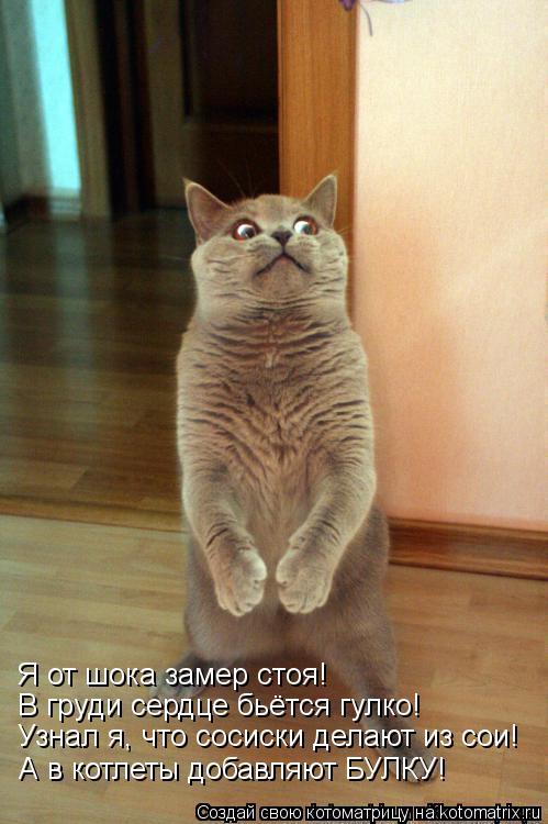 Котоматрица: Я от шока замер стоя! В груди сердце бьётся гулко! Узнал я, что сосиски делают из сои! А в котлеты добавляют БУЛКУ!
