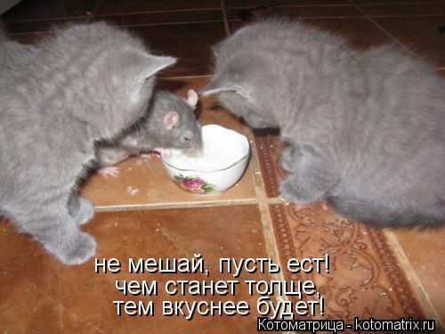 Котоматрица: не мешай, пусть ест! чем станет толще, тем вкуснее будет!