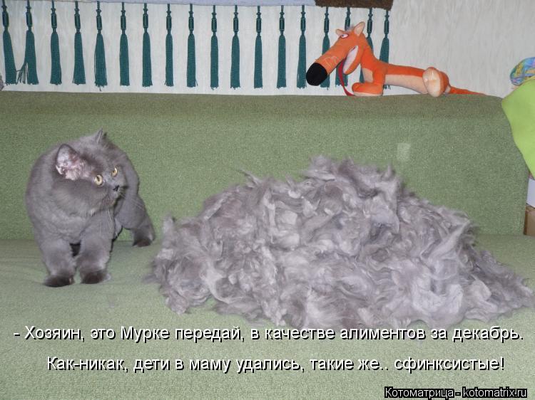 Котоматрица: - Хозяин, это Мурке передай, в качестве алиментов за декабрь. Как-никак, дети в маму удались, такие же.. сфинксистые!